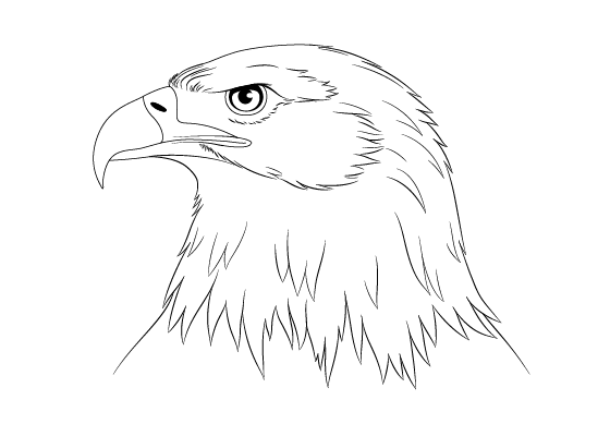 Eagle head drawing tutorial