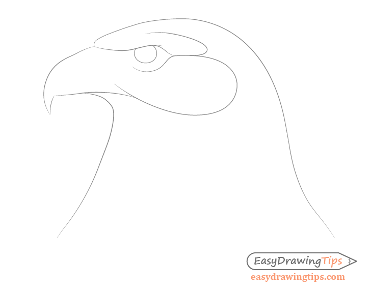 Eagle lower face drawing