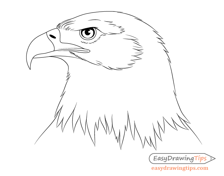 Eagle neck feathers drawing