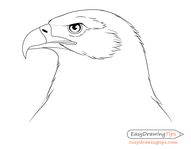 Eagle head feather outline drawing