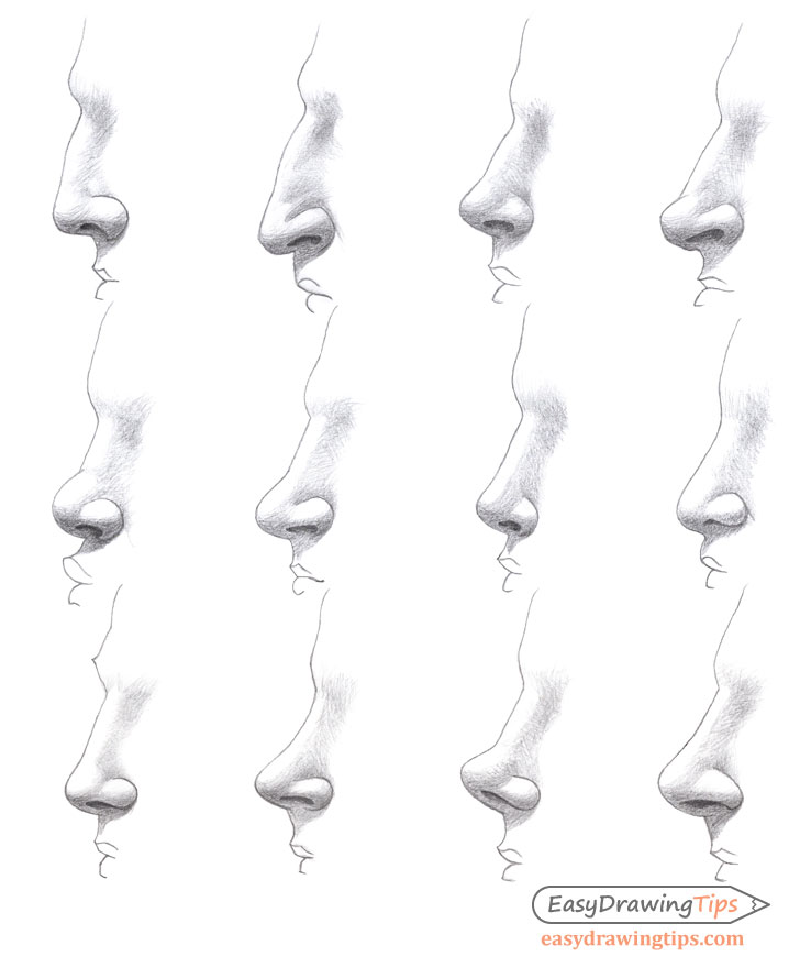Noses different types drawing