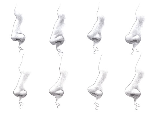 Noses different types drawing tutorial