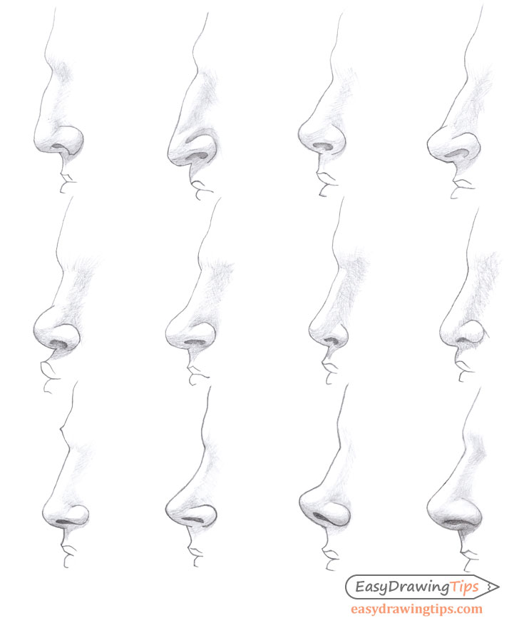 Noses different types shading