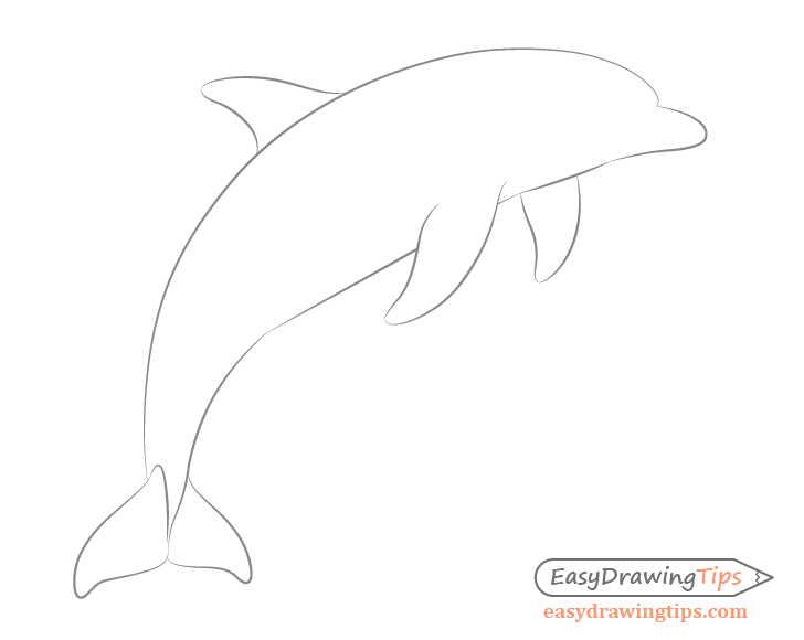 Dolphin back fin drawing