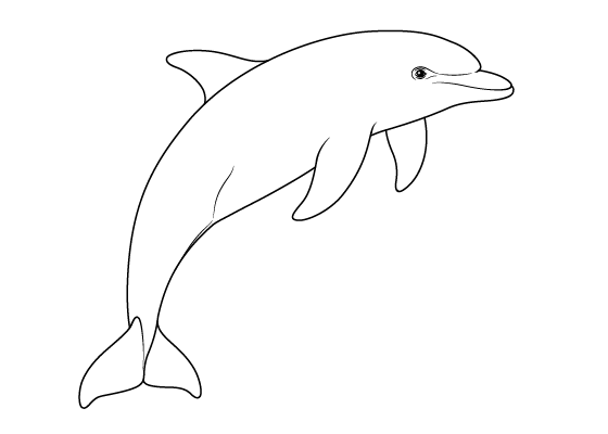 Dolphin drawing tutorial
