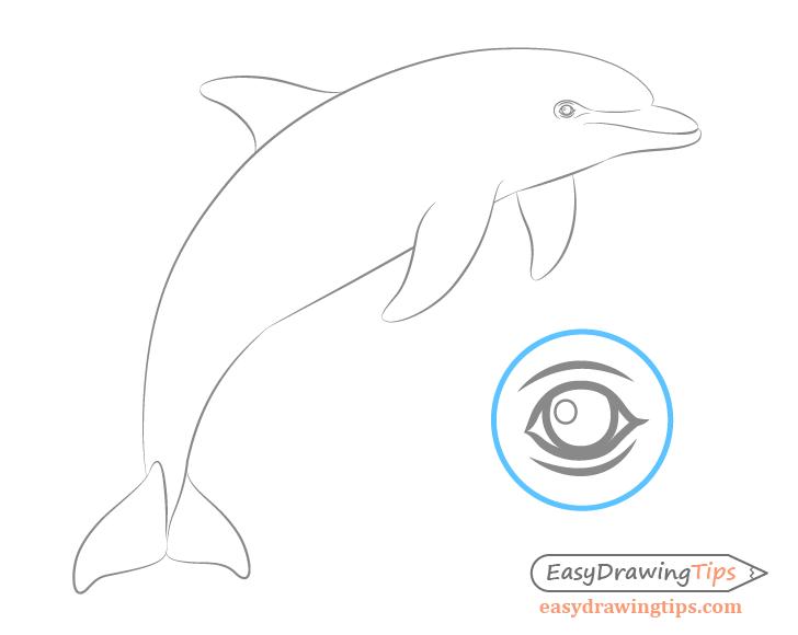 Dolphin eye drawing