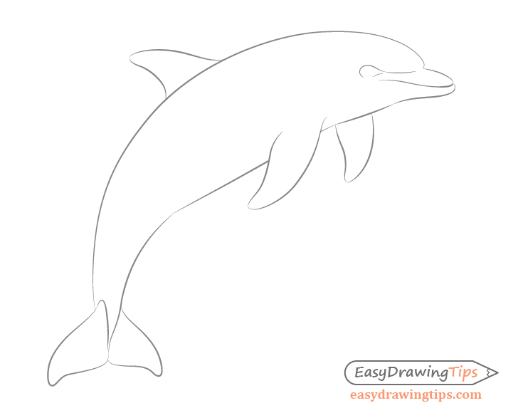 Dolphin face drawing