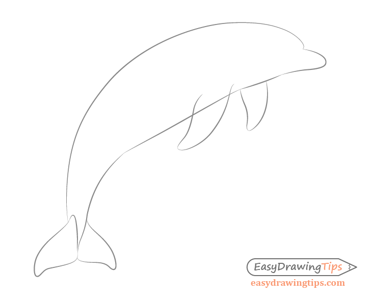 Dolphin flippers drawing