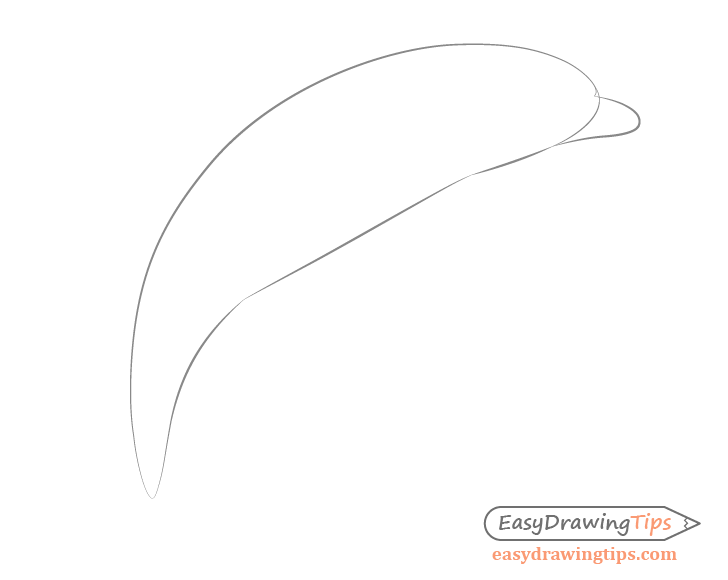 Dolphin nose drawing