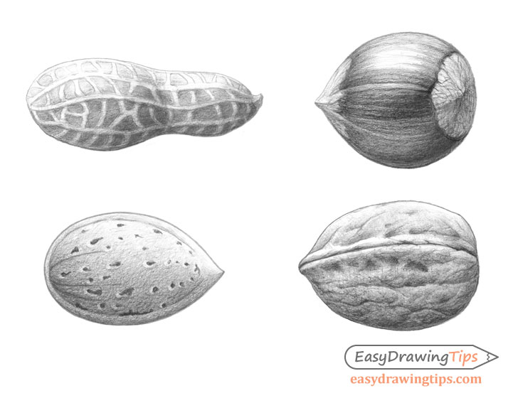 Peanut drawing step by step