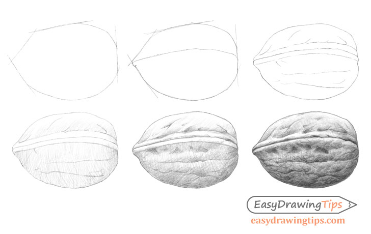 Walnut drawing step by step