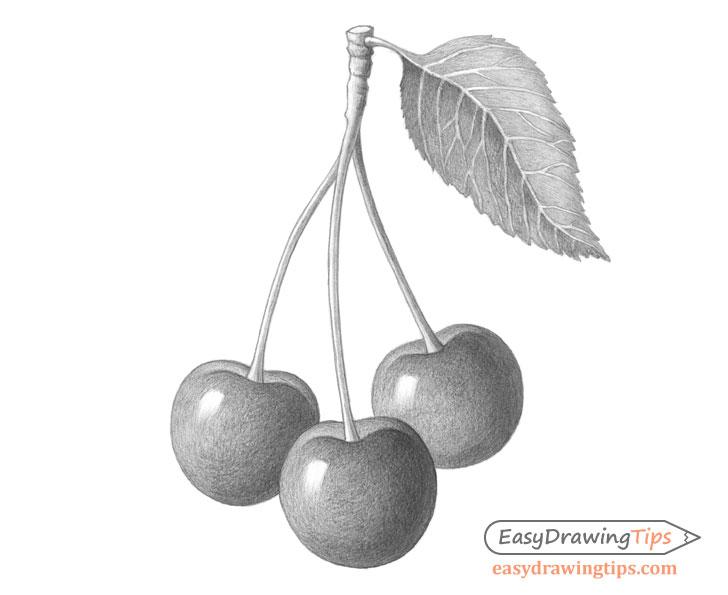 Cherries drawing