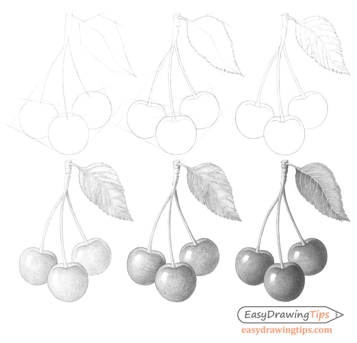 Cherries drawing step by step