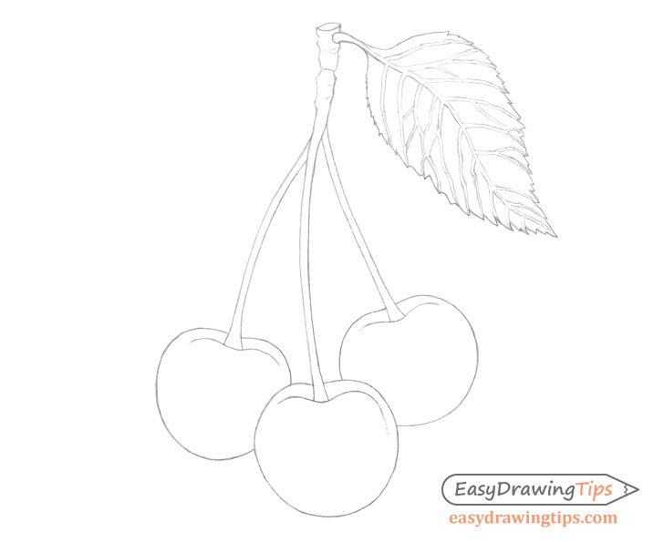 Cherries line drawing