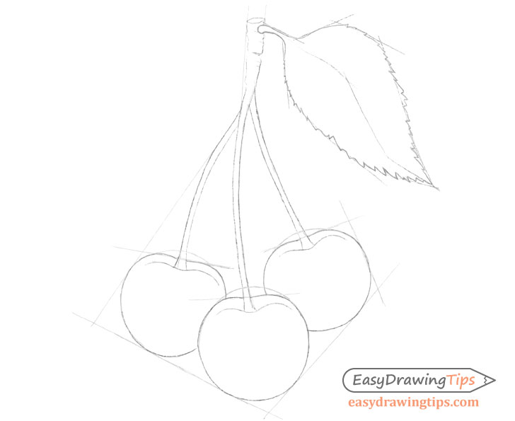 Cherries outline drawing