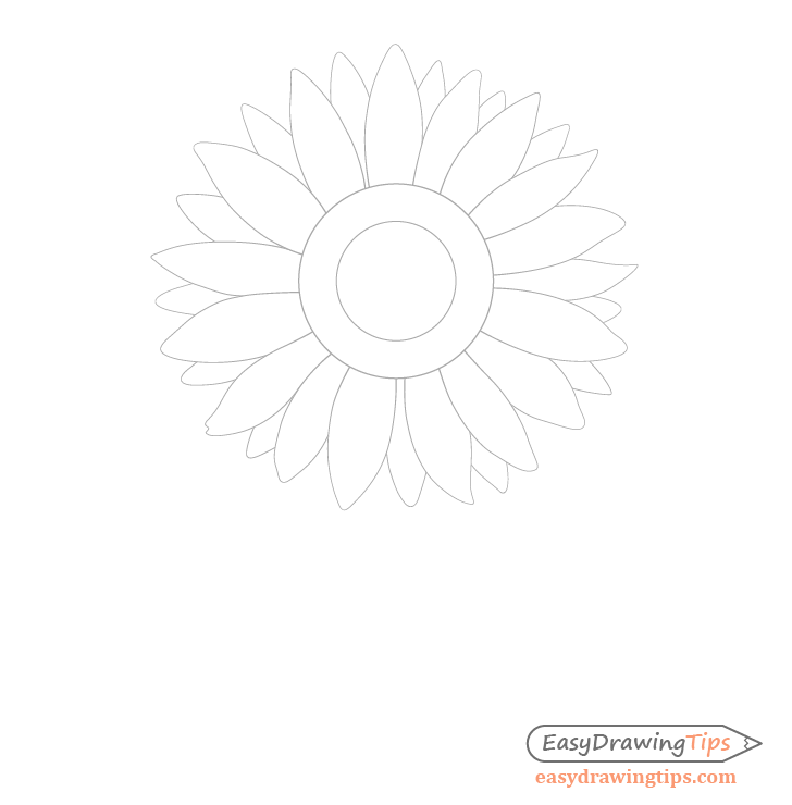 Sunflower background petals drawing