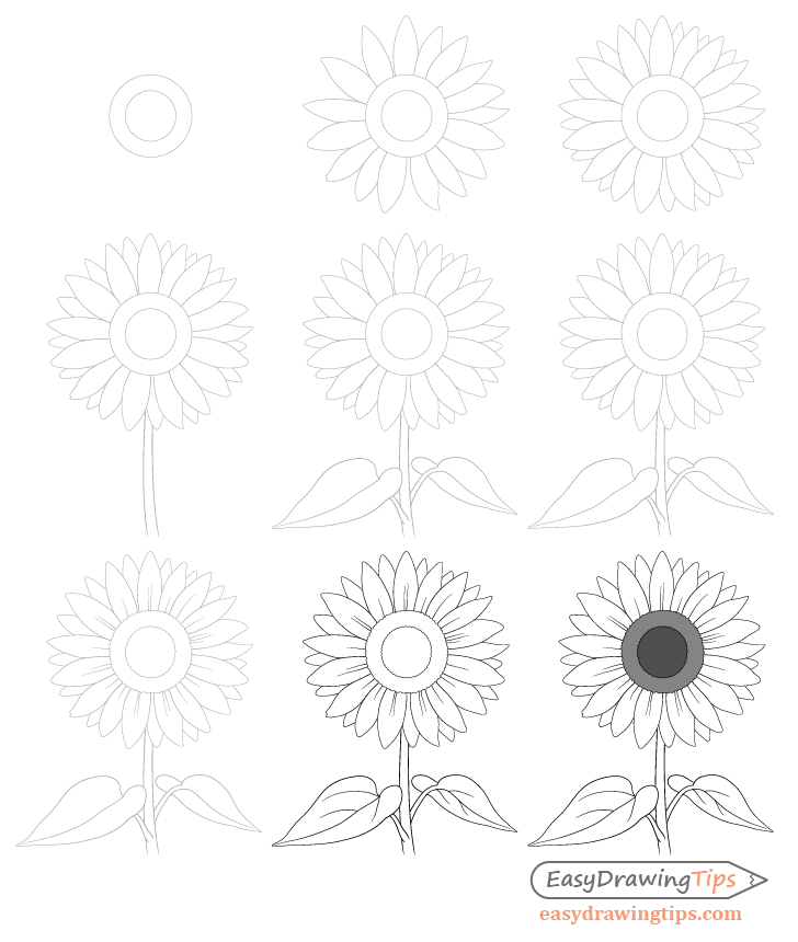 Sunflower drawing step by step