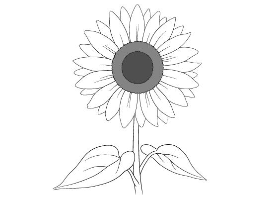 Sunflower drawing tutorial