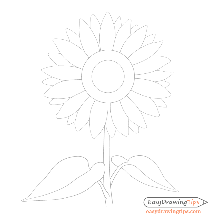 Sunflower leaves drawing
