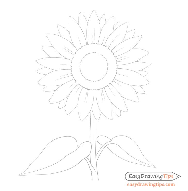Sunflower petal folds drawing